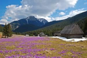 Dolina Chocholowska Tatry